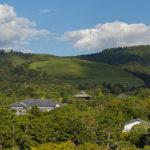Japanese culture in Nara Period. The Tenpyo Culture